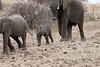 Elephant_Mashatu_Botswanna__0016