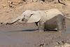 Elephant_MudBath_Mashatu_Botswana0032