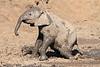 Elephant_MudBath_Mashatu_Botswana0003