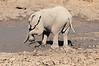 Elephant_MudBath_Mashatu_Botswana0009