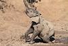 Elephant_MudBath_Mashatu_Botswana0001