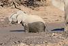 Elephant_MudBath_Mashatu_Botswana0026