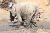 Elephant_MudBath_Mashatu_Botswana0020