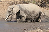 Elephant_MudBath_Mashatu_Botswana0041