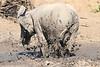 Elephant_MudBath_Mashatu_Botswana0019