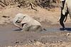 Elephant_MudBath_Mashatu_Botswana0029