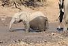 Elephant_MudBath_Mashatu_Botswana0028