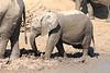 Elephant_MudBath_Mashatu_Botswana0007
