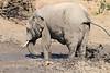 Elephant_MudBath_Mashatu_Botswana0011