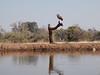 Mashatu_Botswana0008