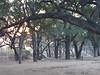 Mashatu_Botswana0012