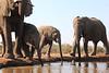 Elephants_Hide_Mashatu_Botswana0024
