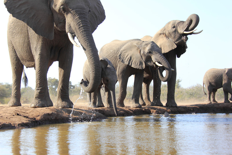Elephants_Hide_Mashatu_Botswana0010