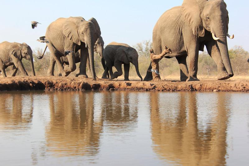 Elephants_Hide_Mashatu_Botswana0004