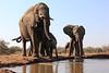 Elephants_Hide_Mashatu_Botswana0025