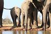 Elephants_Hide_Mashatu_Botswana0034