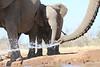 Elephants_Hide_Mashatu_Botswana0052