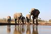 Elephants_Hide_Mashatu_Botswana0005