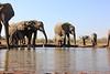 Elephants_Hide_Mashatu_Botswana0013
