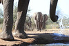 Elephants_Hide_Mashatu_Botswana0035
