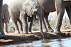 Elephants_Hide_Mashatu_Botswana0045
