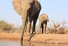 Elephants_Hide_Mashatu_Botswana0016