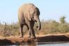 Elephants_Hide_Mashatu_Botswana0042