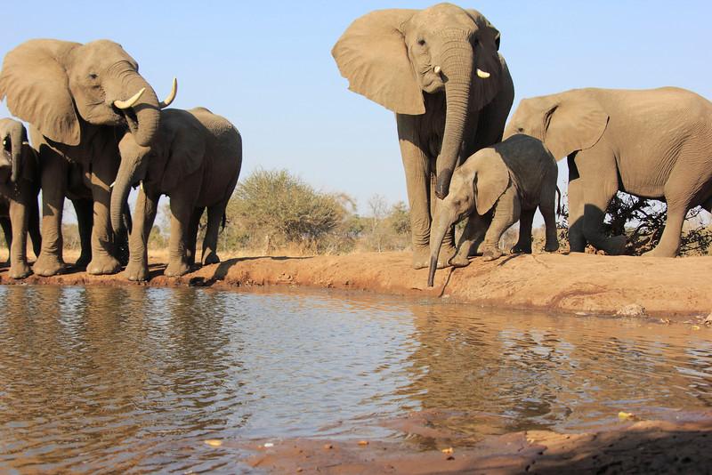 Elephants_Hide_Mashatu_Botswana0017