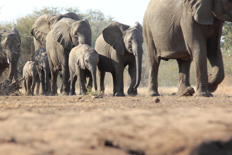 Elephants_Hide_Mashatu_Botswana0002