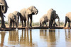 Elephants_Hide_Mashatu_Botswana0007