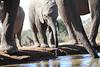 Elephants_Hide_Mashatu_Botswana0046