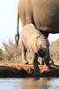 Elephants_Hide_Mashatu_Botswana0032