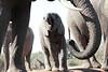 Elephants_Hide_Mashatu_Botswana0047
