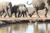 Elephants_Hide_Mashatu_Botswana0003