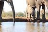 Elephants_Hide_Mashatu_Botswana0014