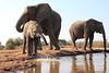 Elephants_Hide_Mashatu_Botswana0027
