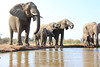 Elephants_Hide_Mashatu_Botswana0011