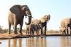 Elephants_Hide_Mashatu_Botswana0012