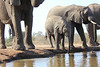 Elephants_Hide_Mashatu_Botswana0020