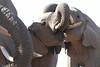 Elephants_Hide_Mashatu_Botswana0043