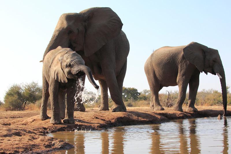 Elephants_Hide_Mashatu_Botswana0026