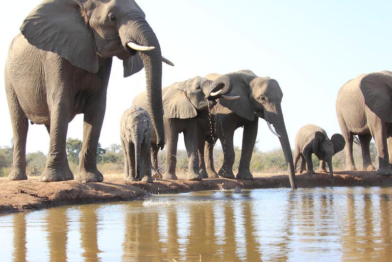 Elephants_Hide_Mashatu_Botswana0009