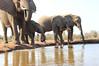 Elephants_Hide_Mashatu_Botswana0022