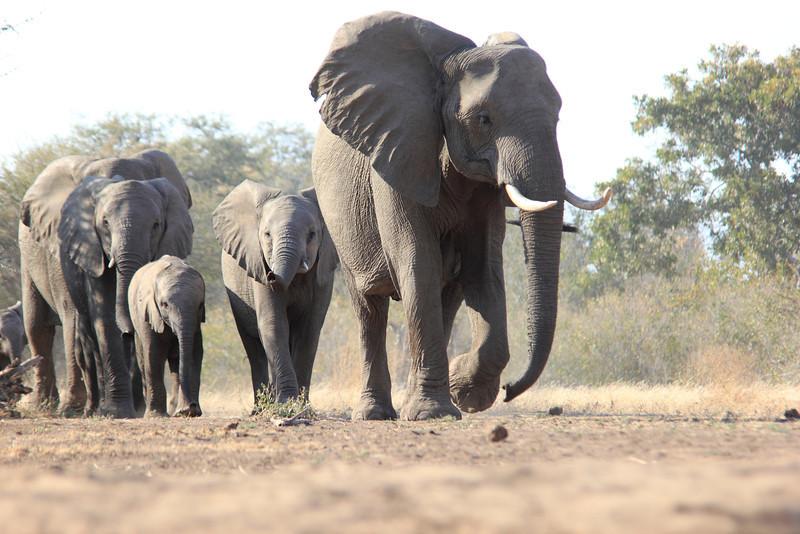 Elephants_Hide_Mashatu_Botswana0001