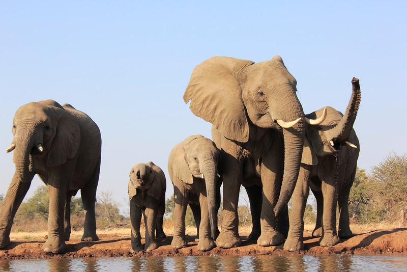 Elephants_Hide_Mashatu_Botswana0019