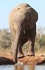 Elephants_Hide_Mashatu_Botswana0037