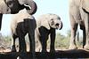 Elephants_Hide_Mashatu_Botswana0040