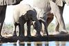 Elephants_Hide_Mashatu_Botswana0039