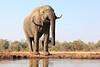 Elephants_Hide_Mashatu_Botswana0028