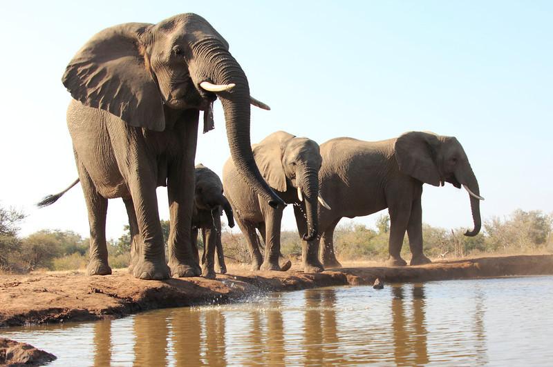 Elephants_Hide_Mashatu_Botswana0021